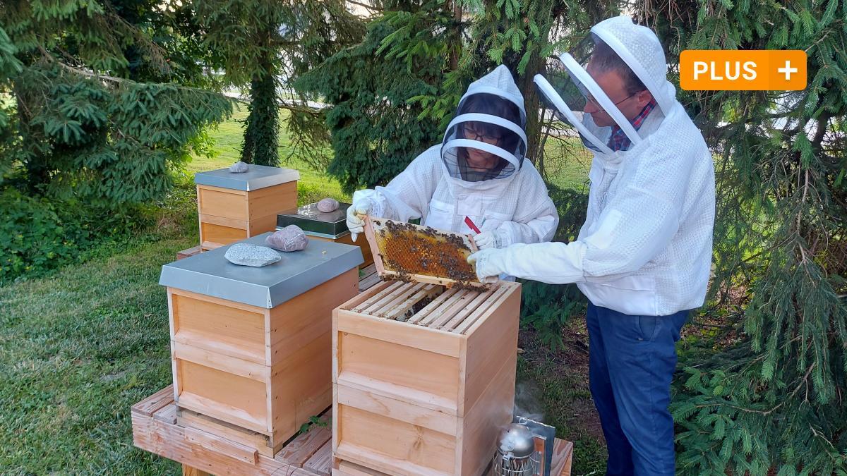 Neuburg-Schrobenhausen: Young beekeepers in the Neuburg region: why beekeeping thrives?
