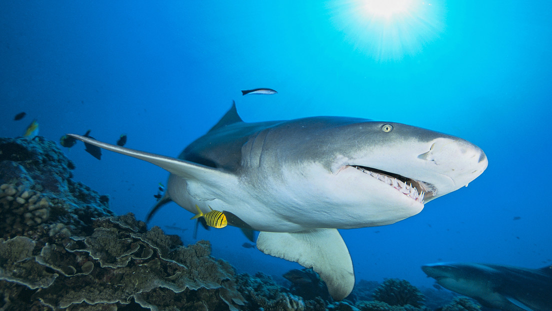 "Australia: off ""shark attacks هجمات"" Become ""negative encounters"""