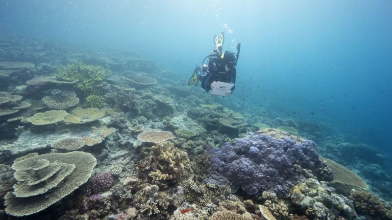 Australia's Great Barrier Reef is causing a clash within the Spanish government    Climate and environment