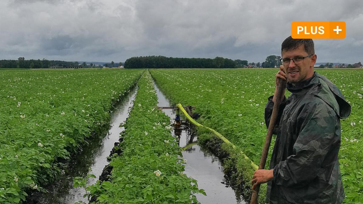 Neuburg: Rain causes problems for potatoes and cherries in the Neuburg region