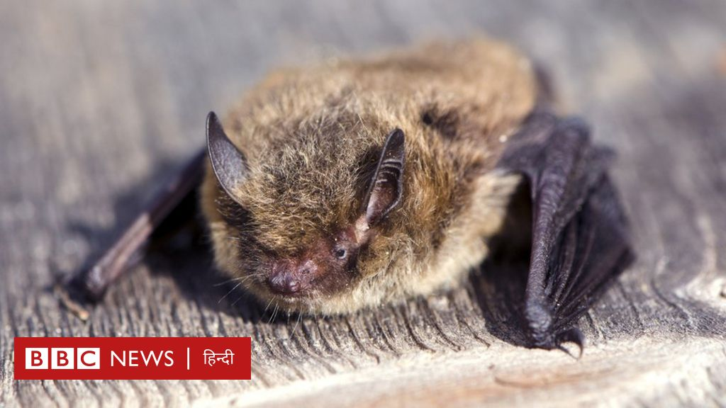 The cat killed a bat that traveled a record distance of 2000 km