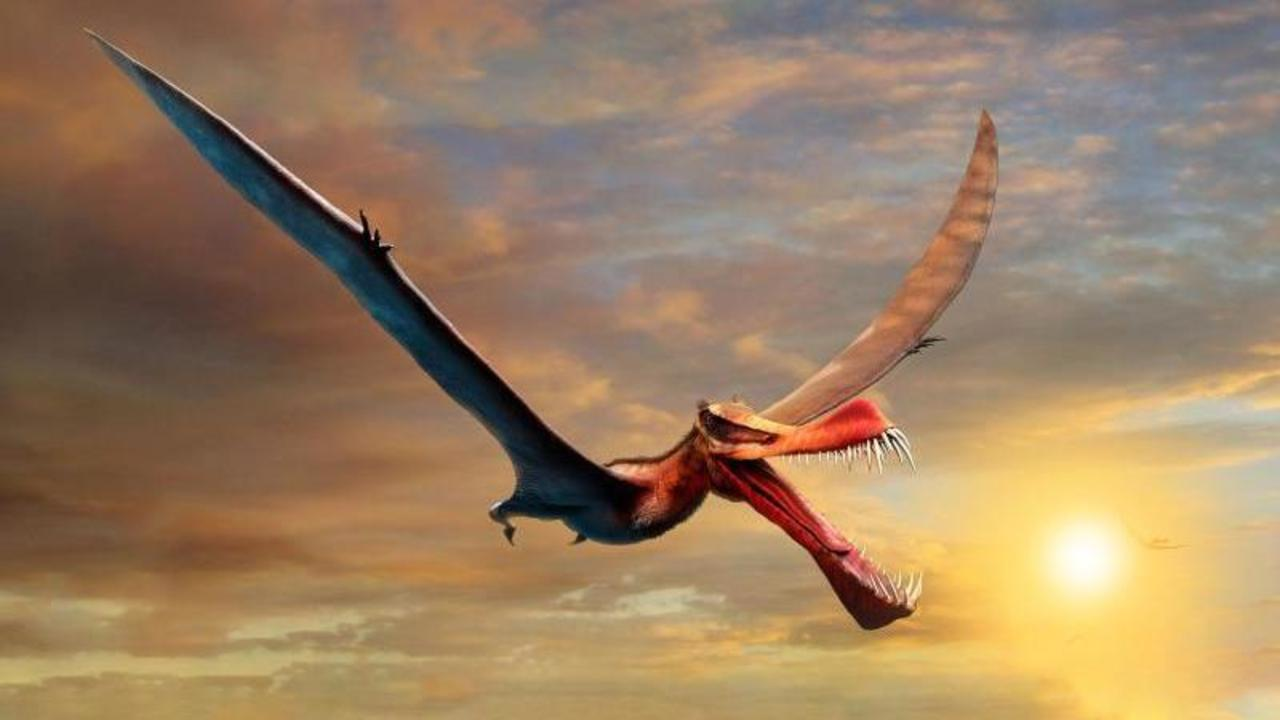 Giant pterosaurs were once inhabited in Australia – science