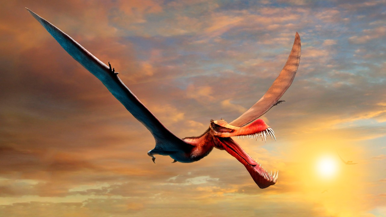 Discover the remains of a flying dinosaur in Australia – Noticieros Televisa