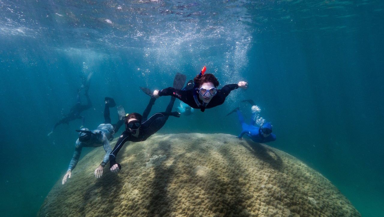 Australia: Scientists discover giant corals in the Great Barrier Reef