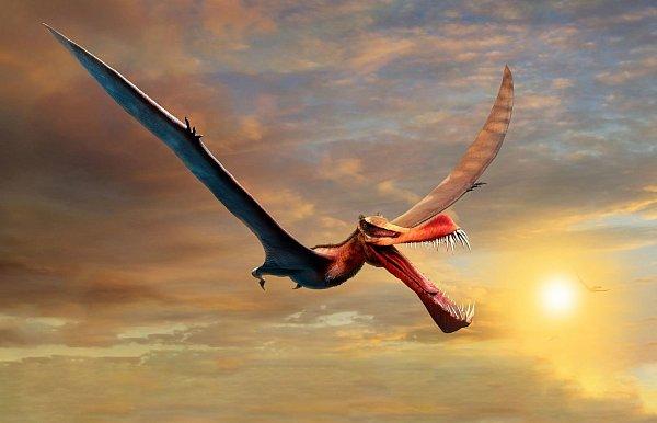 Giant pterosaurs were inhabited in Australia