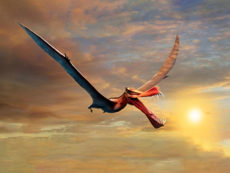 Giant pterosaurs were once inhabited in Australia    free press