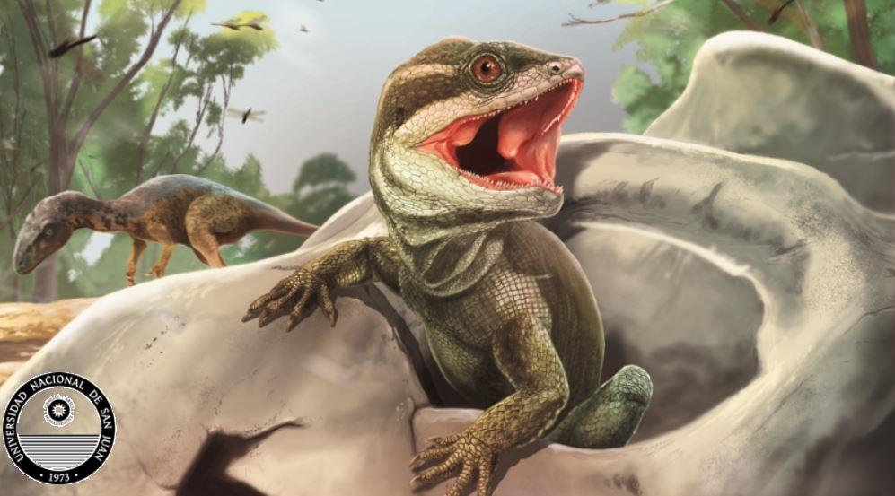 Here Taitalora, the grandfather of all lizards