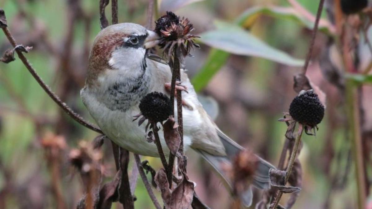 Scientific survey: Number of birds: 1.6 billion birds and only 3000 kiwis