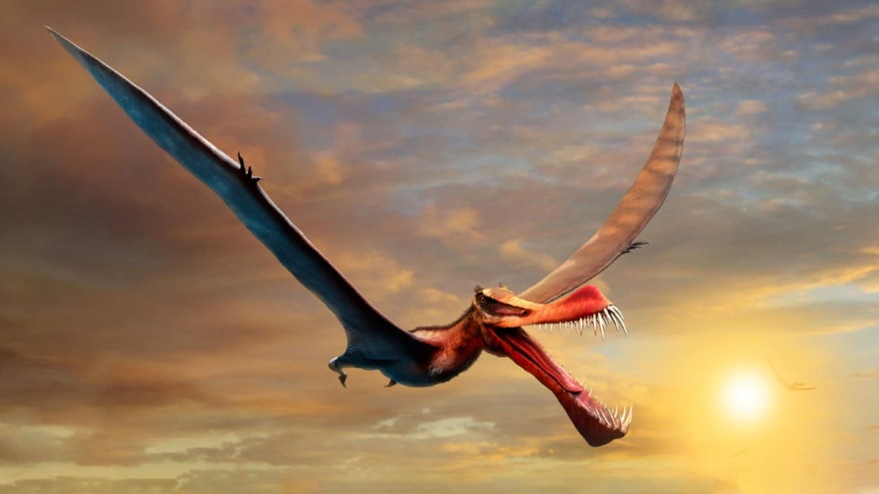 """They found a flying dinosaur, described as a """"scary dragon"""", in Australia"""