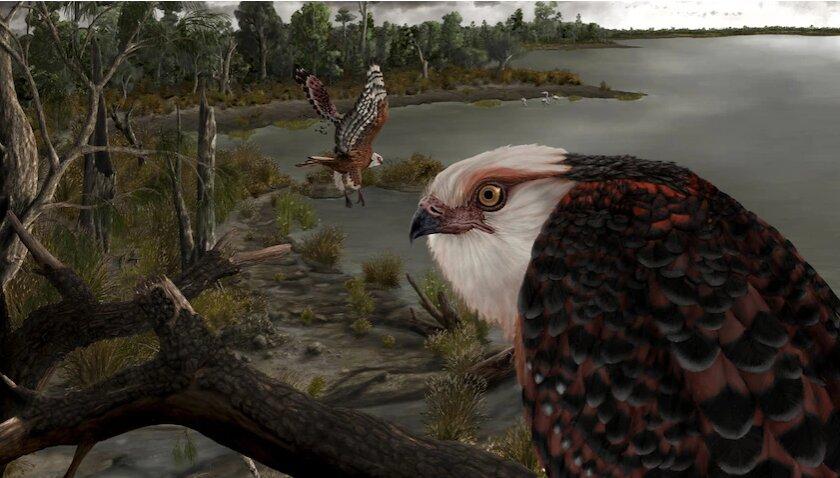Fossils of an Australian predatory vulture found in Lake Benba