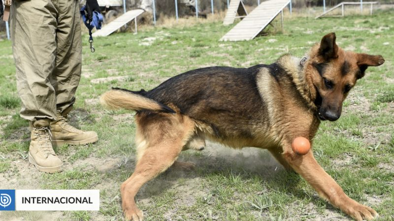 America denies that its army abandoned dogs when it withdrew from Afghanistan |  international