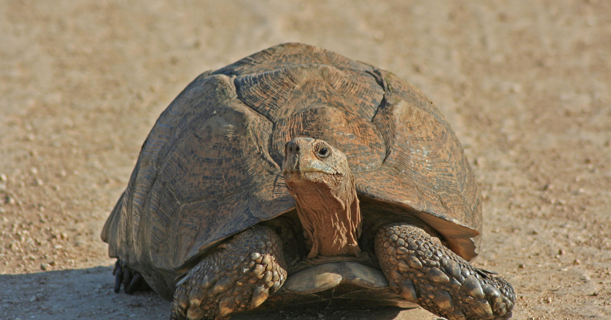 Chaos in one of Japan's busiest airports because of a turtle.  Five flights have been postponed