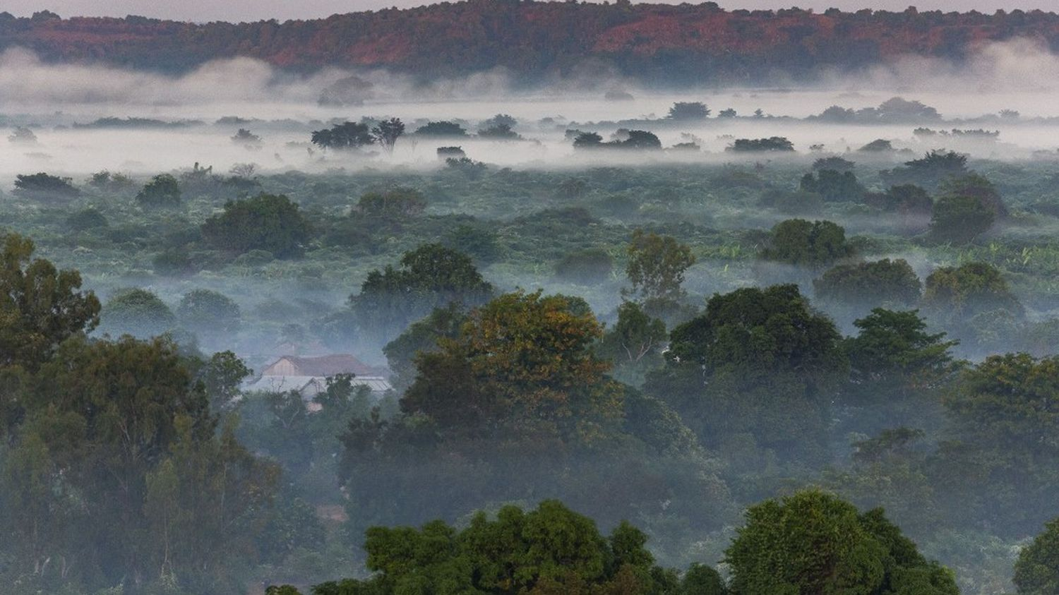 One third of tree species are threatened with extinction worldwide