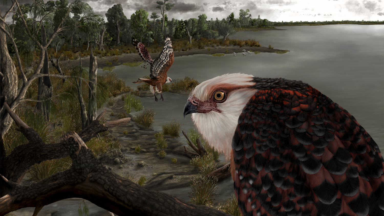 Paleontology: The Eagle Rules Australia – The Science Spectrum