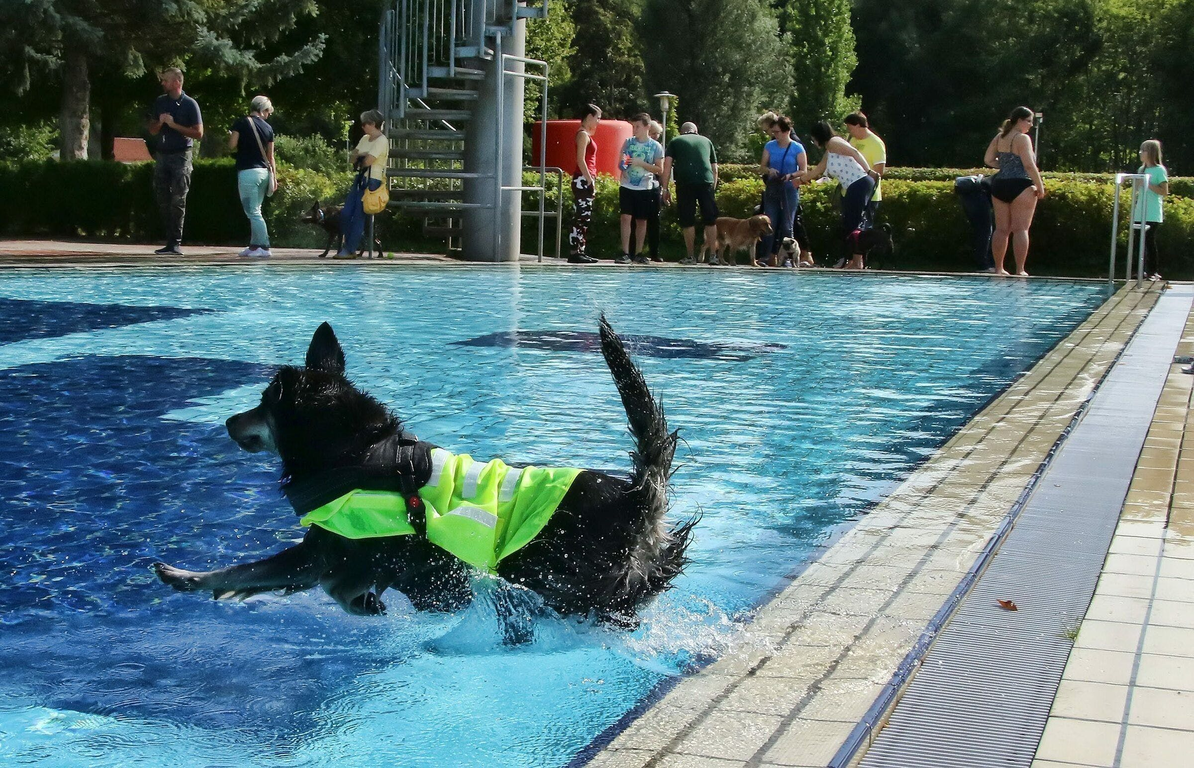 The outdoor pools in the Sangerhäuser region see no need to spend a day bathing the dogs